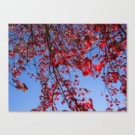 Redleaves Canvas Print