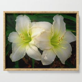 Glowing white daylily flowers - Hemerocallis Indy Seductress Serving Tray