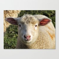 lamb Canvas Prints featuring lamb by OllieThatsMe