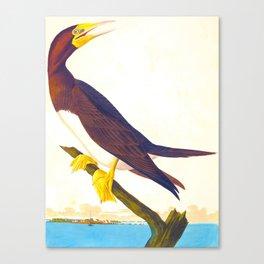 Booby Gannet John James Audubon Vintage Scientific Birds of America Illustration Canvas Print