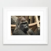 gorilla Framed Art Prints featuring Gorilla  by Rob Hawkins Photography