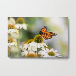 Beautiful Butterfly on Cone Flower Metal Print