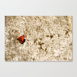 italien butterfly Canvas Print