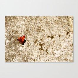 italien butterfly Canvas Print