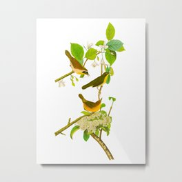 Yellow-breasted Warbler Bird Metal Print
