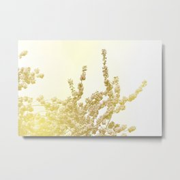Sunlit Cherry Blossoms - Dreamy Floral Photography - Flower Art Prints, Apparel, Accessories... Metal Print