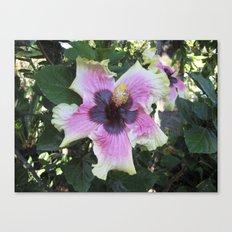 Hibiscus  Canvas Print