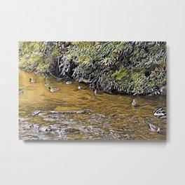Mallard Creek 1 (Early Autumn) Metal Print