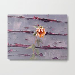 Vintage Sunflower and Wall Metal Print