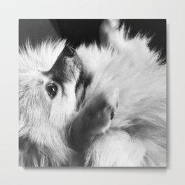 Just Love Pomeranians Metal Print