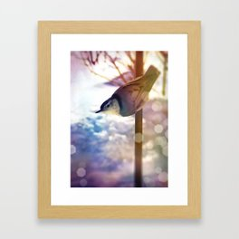 White-Breasted Nuthatch Framed Art Print