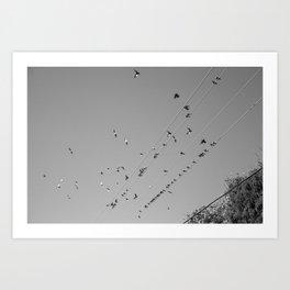 Birds & Wires Art Print