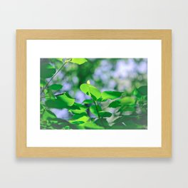 Sunlit Leaves Framed Art Print