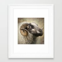 ram Framed Art Prints featuring Ram by Pauline Fowler ( Polly470 )
