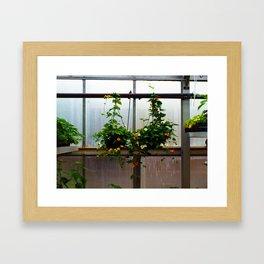 Hanging Flowers Framed Art Print
