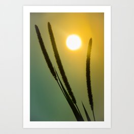 Silhouettes in Sunset Botanical / Nature Photograph Art Print