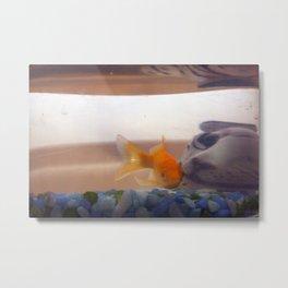 Fish mystery Metal Print