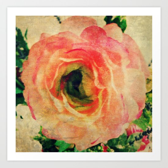 Study of a Rose Art Print
