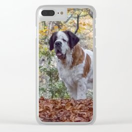 Big St Bernard dog in Autumn leaves Clear iPhone Case