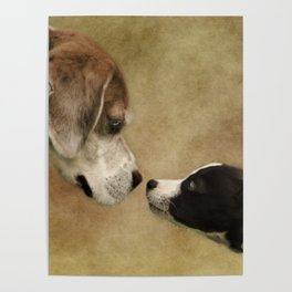 Nose To Nose Dogs Poster
