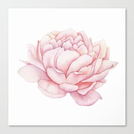 Pink Peony Watercolor Canvas Print