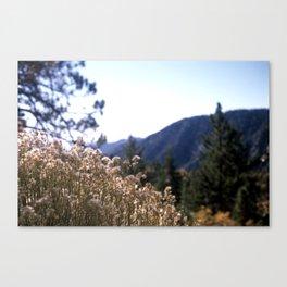 Golden Whisps Canvas Print
