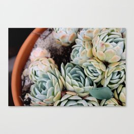 California Potted Succulents Canvas Print