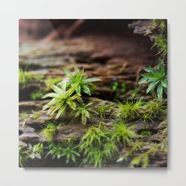 Moss on a Decaying Log Metal Print