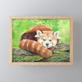 Red panda Framed Mini Art Print