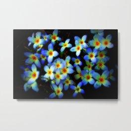 Spring Bluets Metal Print