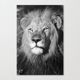 Let it Roar Canvas Print