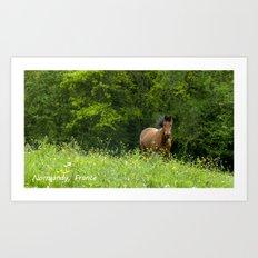 Horse in a pature Art Print
