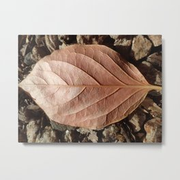 Copper leaf Metal Print