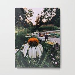Summer daisy Metal Print