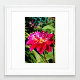 Bright & Bold Framed Art Print
