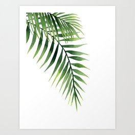Palm leaves. Art Print