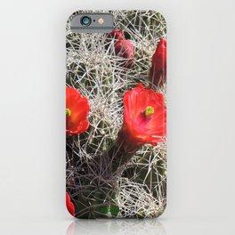 A Hedgehog Cactus Looks Sunward iPhone Case