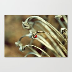 Ladybug Canvas Print