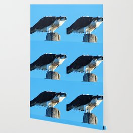 Osprey On A Pole Wallpaper