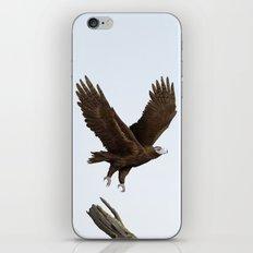 Wedge-Tailed Eagle (Aquila audax fleayi) iPhone Skin