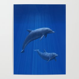 Dolphin Couple Poster