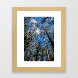 Tall Timber Framed Art Print