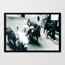 Dog Walker NYC  Canvas Print
