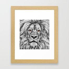 Black Lion Framed Art Print