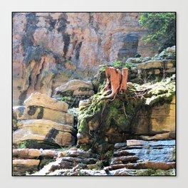 Yangtze River roots China Canvas Print