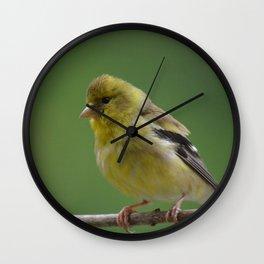 Immature American Goldfinch Wall Clock