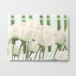 Delicate Beauty of White Tulips Art Metal Print