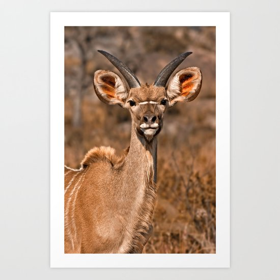 Young Kudu Art Print