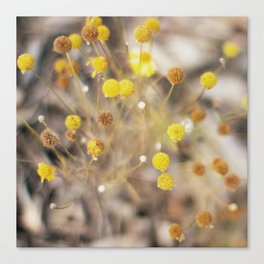 Abstract Botanical - Billy Buttons Canvas Print