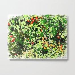 Hortus Conclusus: tomato plants Metal Print